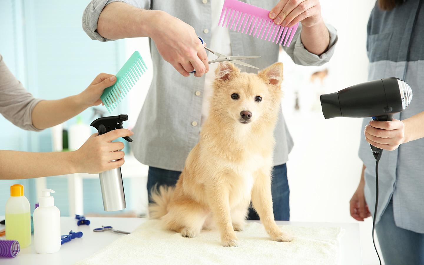 Pet grooming salon, est 1999, under full management, good ROI